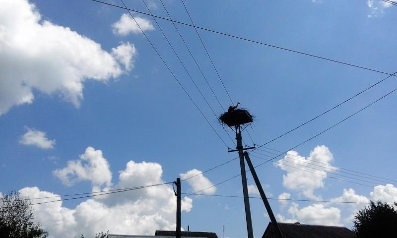 один день луганчанки в карпатской деревне, фото 24