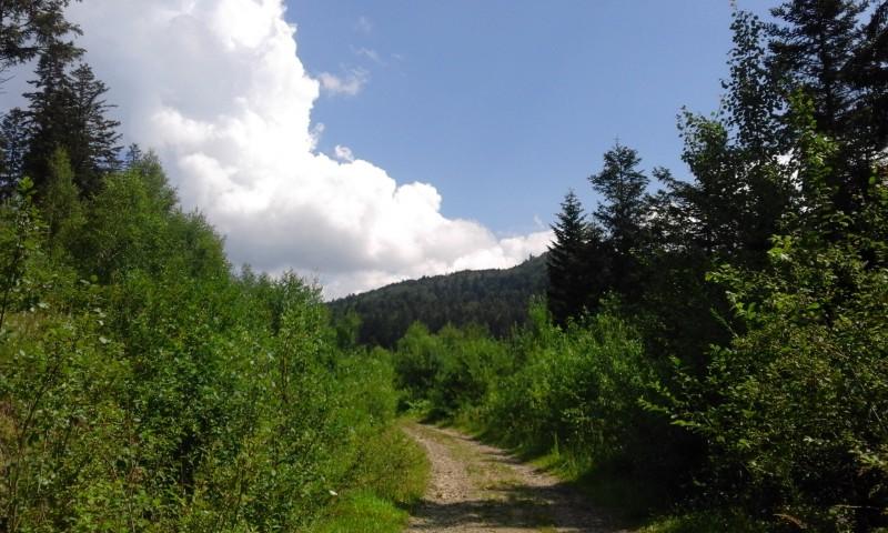 один день луганчанки в карпатской деревне, фото 37