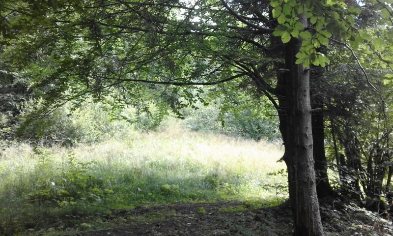 один день луганчанки в карпатской деревне, фото 38