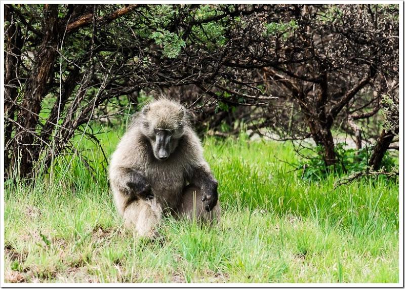 один мой день в Драконовых горах, ЮАР, фото 41