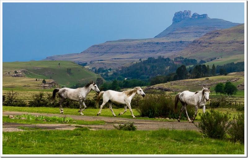 один мой день в Драконовых горах, ЮАР, фото 53