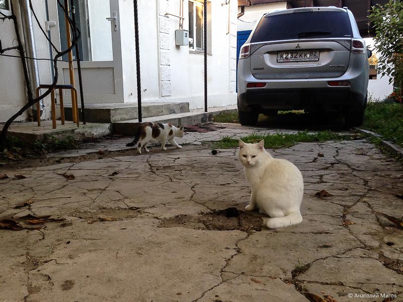 один октябрьский день простого крымского пенсионера, фото 7