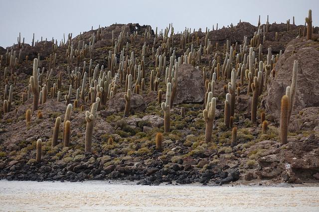 один день путешественника по боливийскому Альтиплато, фото 17