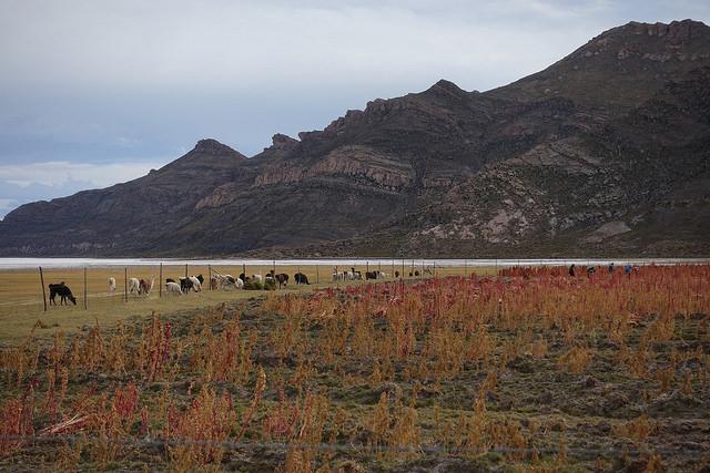 один день путешественника по боливийскому Альтиплато, фото 29