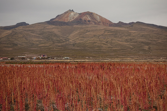 один день путешественника по боливийскому Альтиплато, фото 30
