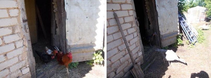 один будний день селянки Виктории из Липецкой области, фото 10