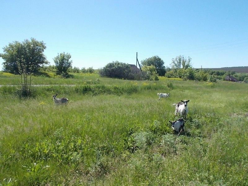 один будний день селянки Виктории из Липецкой области, фото 16