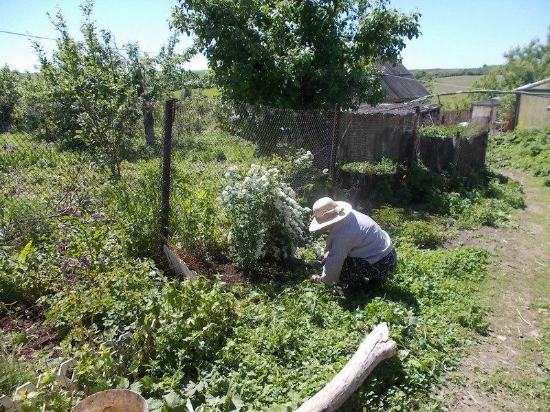 один будний день селянки Виктории из Липецкой области, фото 33