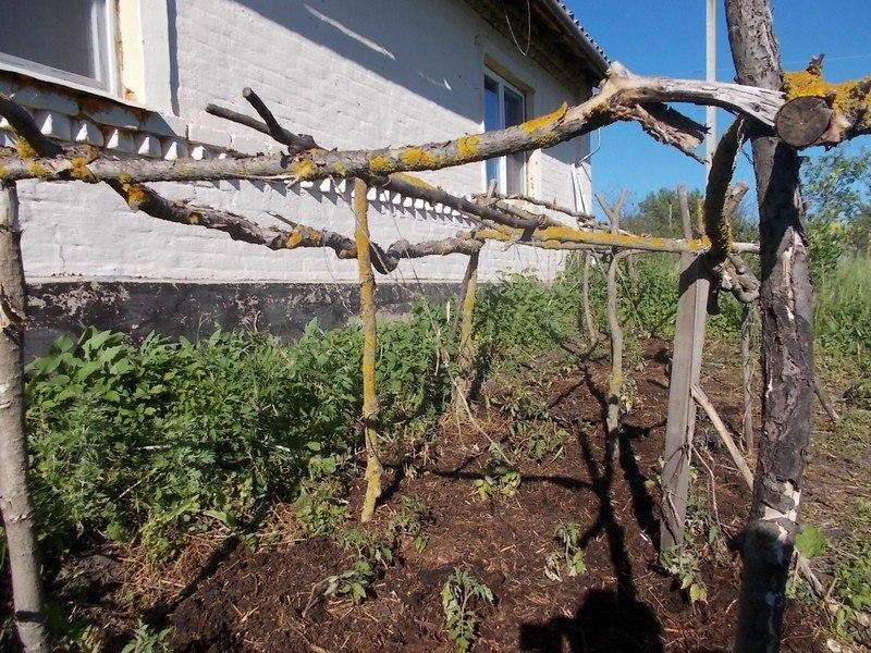 один будний день селянки Виктории из Липецкой области, фото 42