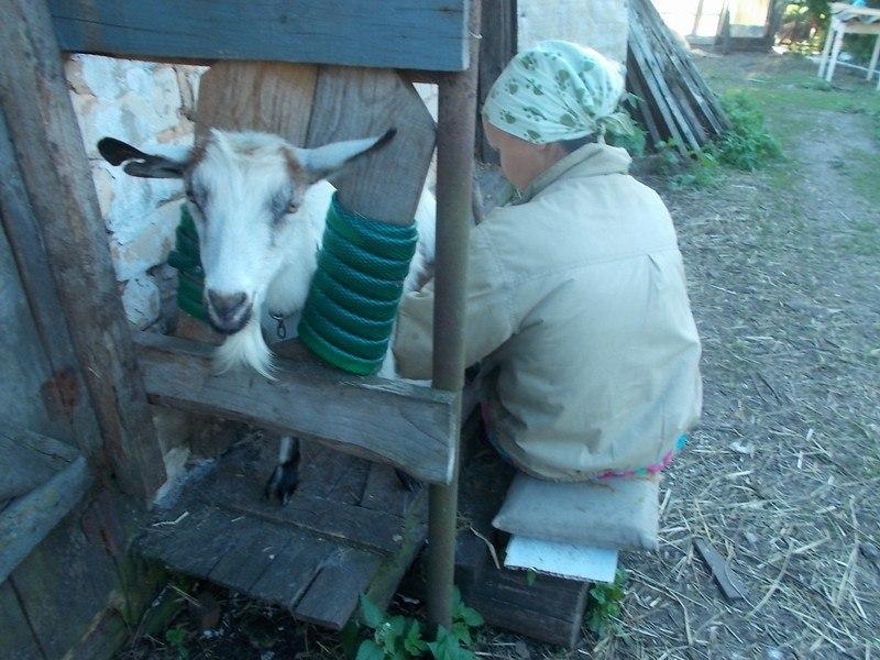один будний день селянки Виктории из Липецкой области, фото 50