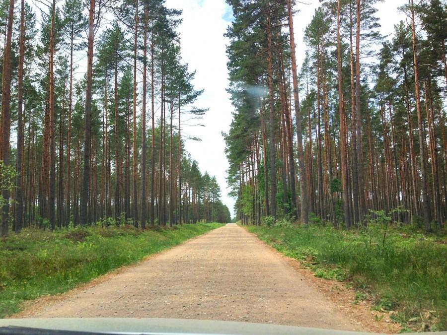 один день домохозяйки в городе Рига, Латвия, фото 29