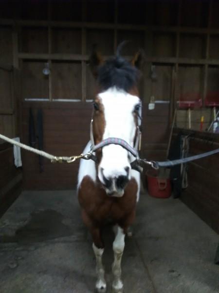 один мой рабочий день и подготовка к выездным соревнованиям по конному спорту, фото 12