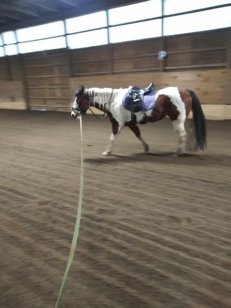 один мой рабочий день и подготовка к выездным соревнованиям по конному спорту, фото 13