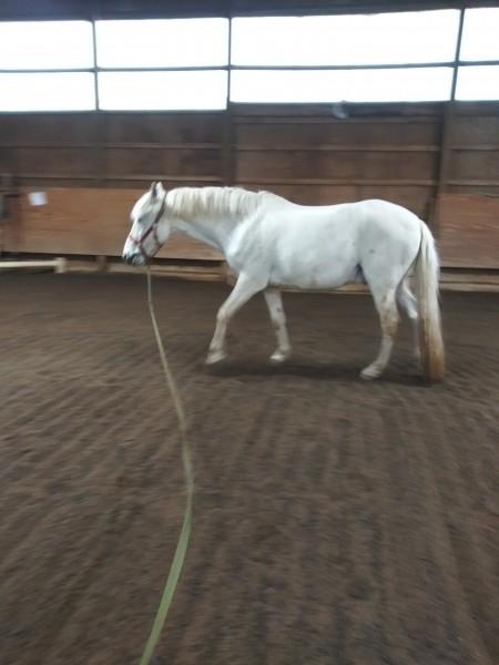 один мой рабочий день и подготовка к выездным соревнованиям по конному спорту, фото 16