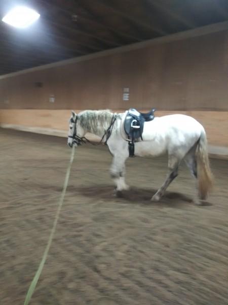 один мой рабочий день и подготовка к выездным соревнованиям по конному спорту, фото 17