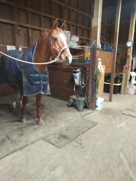 один мой рабочий день и подготовка к выездным соревнованиям по конному спорту, фото 19