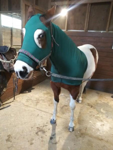 один мой рабочий день и подготовка к выездным соревнованиям по конному спорту, фото 21