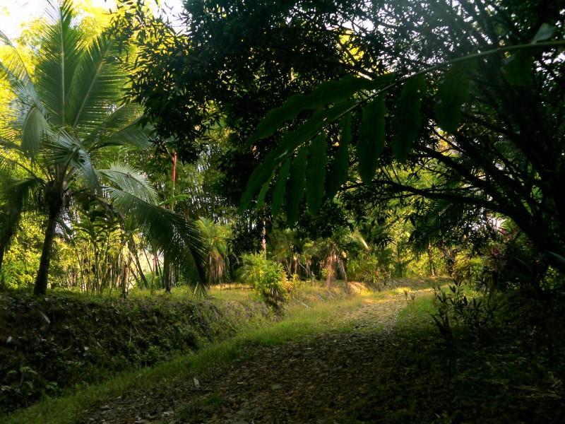 один мой день в стране, в которой вечное лето, Коста-Рика, фото 13