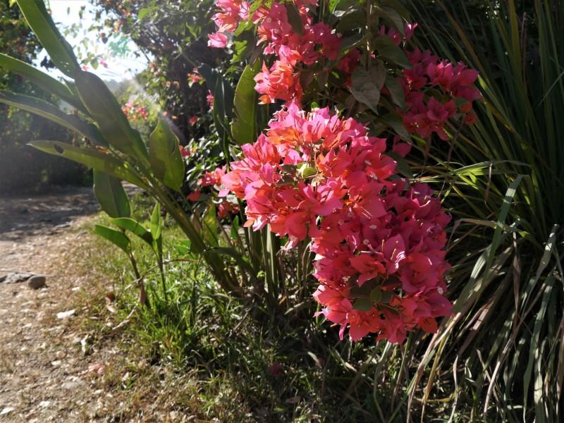 один мой день в стране, в которой вечное лето, Коста-Рика, фото 24