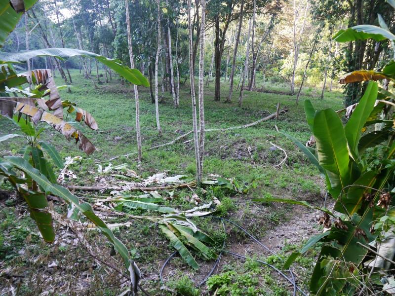 один мой день в стране, в которой вечное лето, Коста-Рика, фото 9
