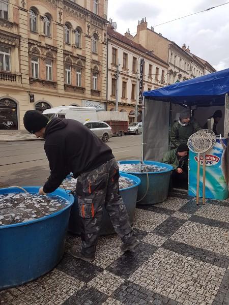 один выходной день русской эмигрантки в Праге, фото 32