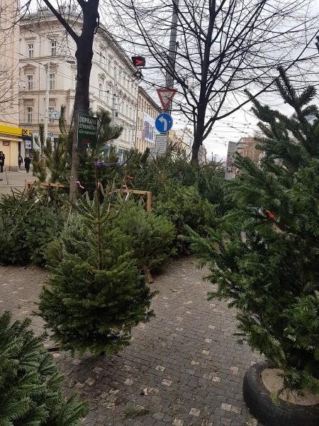 один выходной день русской эмигрантки в Праге, фото 34