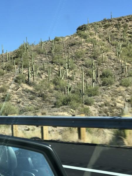 один мой день в пригороде Финикса, Скоттсдэйле, Аризона, фото 15