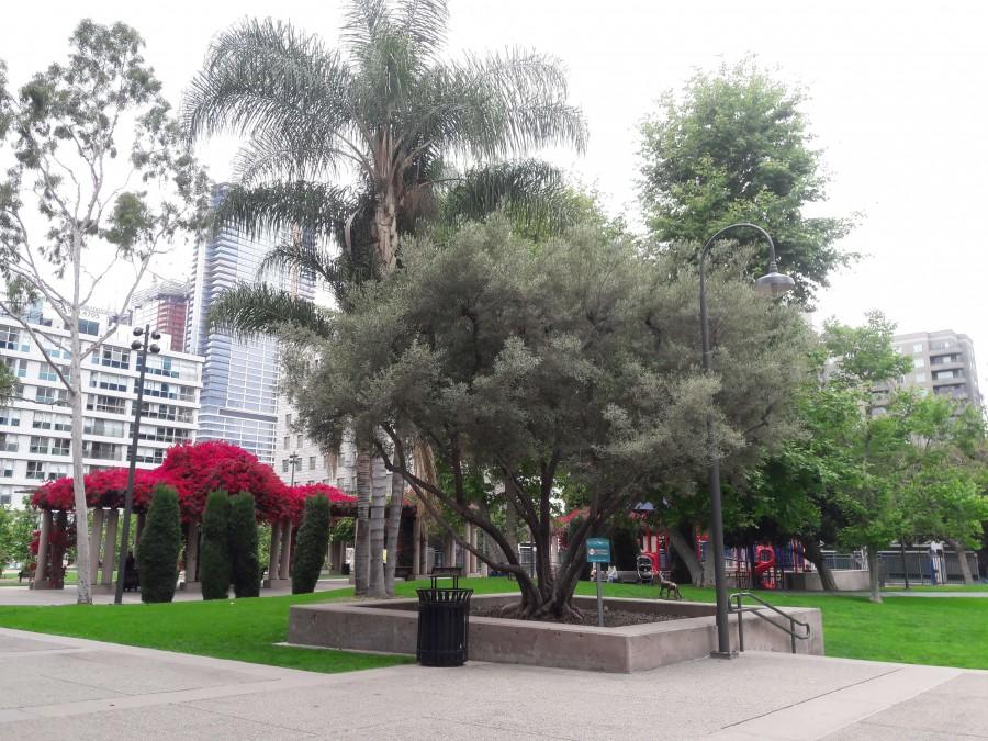 один мой дождливый день в Даунтауне Лос-Анджелеса, фото 14