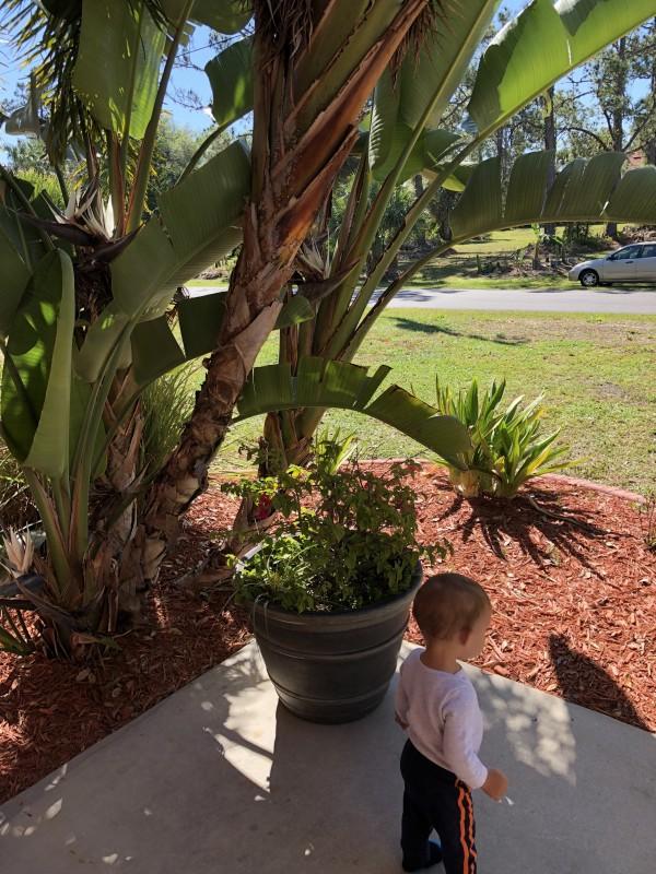 один мой выходной, проведенный за домашними хлопотами, Флорида, США, фото 23