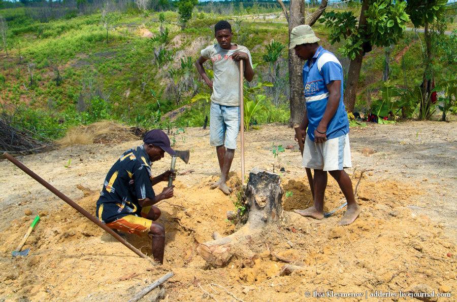 один рядовой день плантатора на Мадагаскаре, фото 11