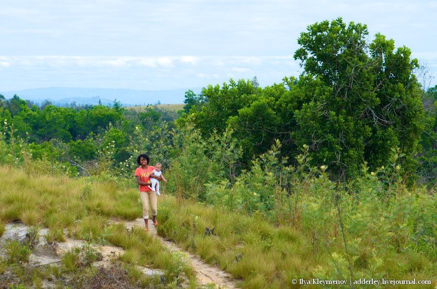 один рядовой день плантатора на Мадагаскаре, фото 32