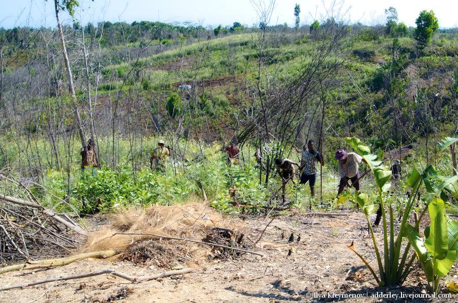 один рядовой день плантатора на Мадагаскаре, фото 4