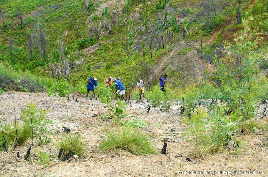 один рядовой день плантатора на Мадагаскаре, фото 5