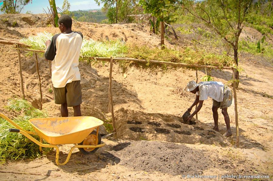 один рядовой день плантатора на Мадагаскаре, фото 8