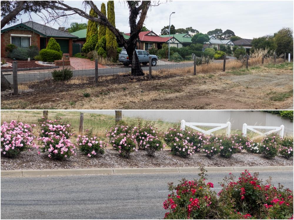 один мой день на пути Шираза в городе Аделаида, штат Южная Австралия, фото 16