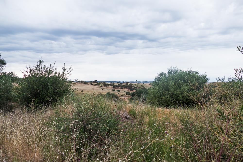 один мой день на пути Шираза в городе Аделаида, штат Южная Австралия, фото 19