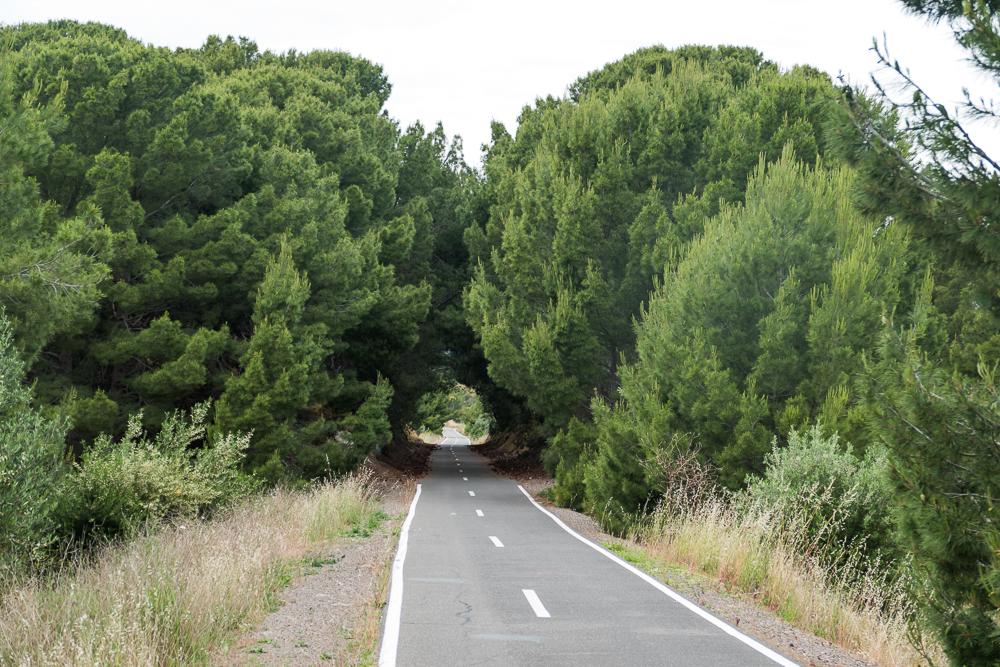 один мой день на пути Шираза в городе Аделаида, штат Южная Австралия, фото 22