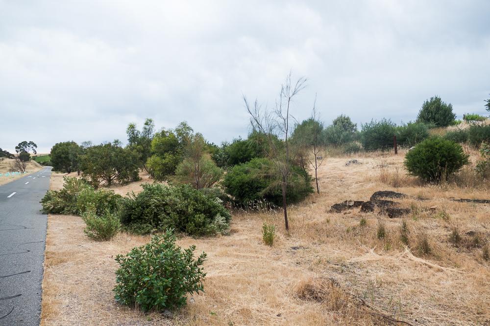 один мой день на пути Шираза в городе Аделаида, штат Южная Австралия, фото 27