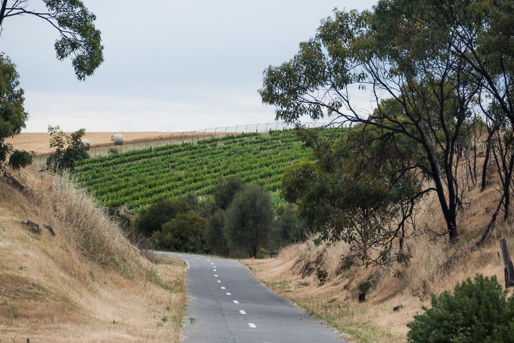 один мой день на пути Шираза в городе Аделаида, штат Южная Австралия, фото 28
