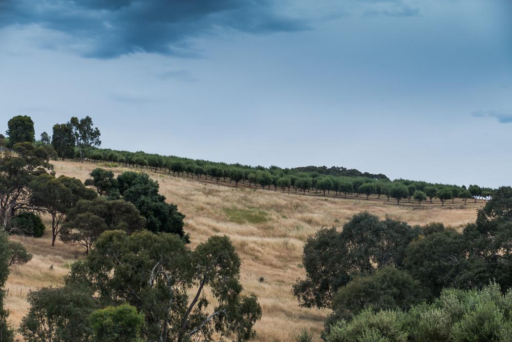 один мой день на пути Шираза в городе Аделаида, штат Южная Австралия, фото 29