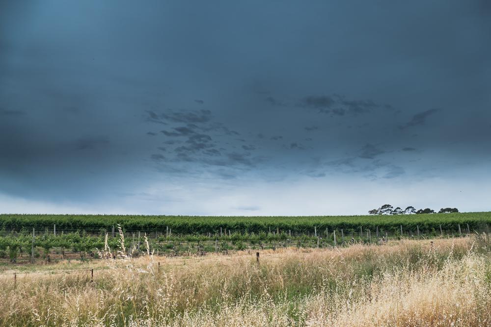 один мой день на пути Шираза в городе Аделаида, штат Южная Австралия, фото 58