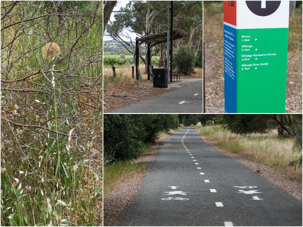 один мой день на пути Шираза в городе Аделаида, штат Южная Австралия, фото 63