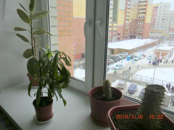 один будний день российской пенсионерки в Сибири, фото 16