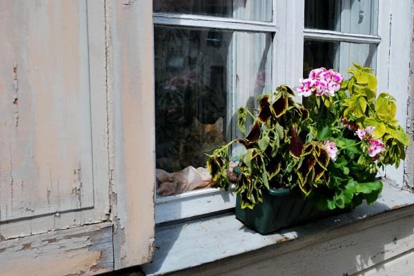 один мой летний день в латвийском городе Цесис, фото 16