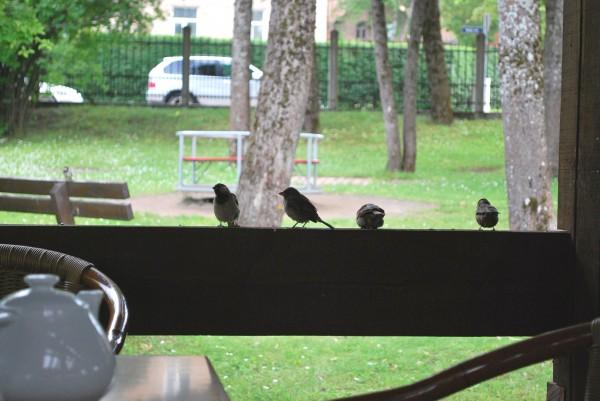 один мой летний день в латвийском городе Цесис, фото 27