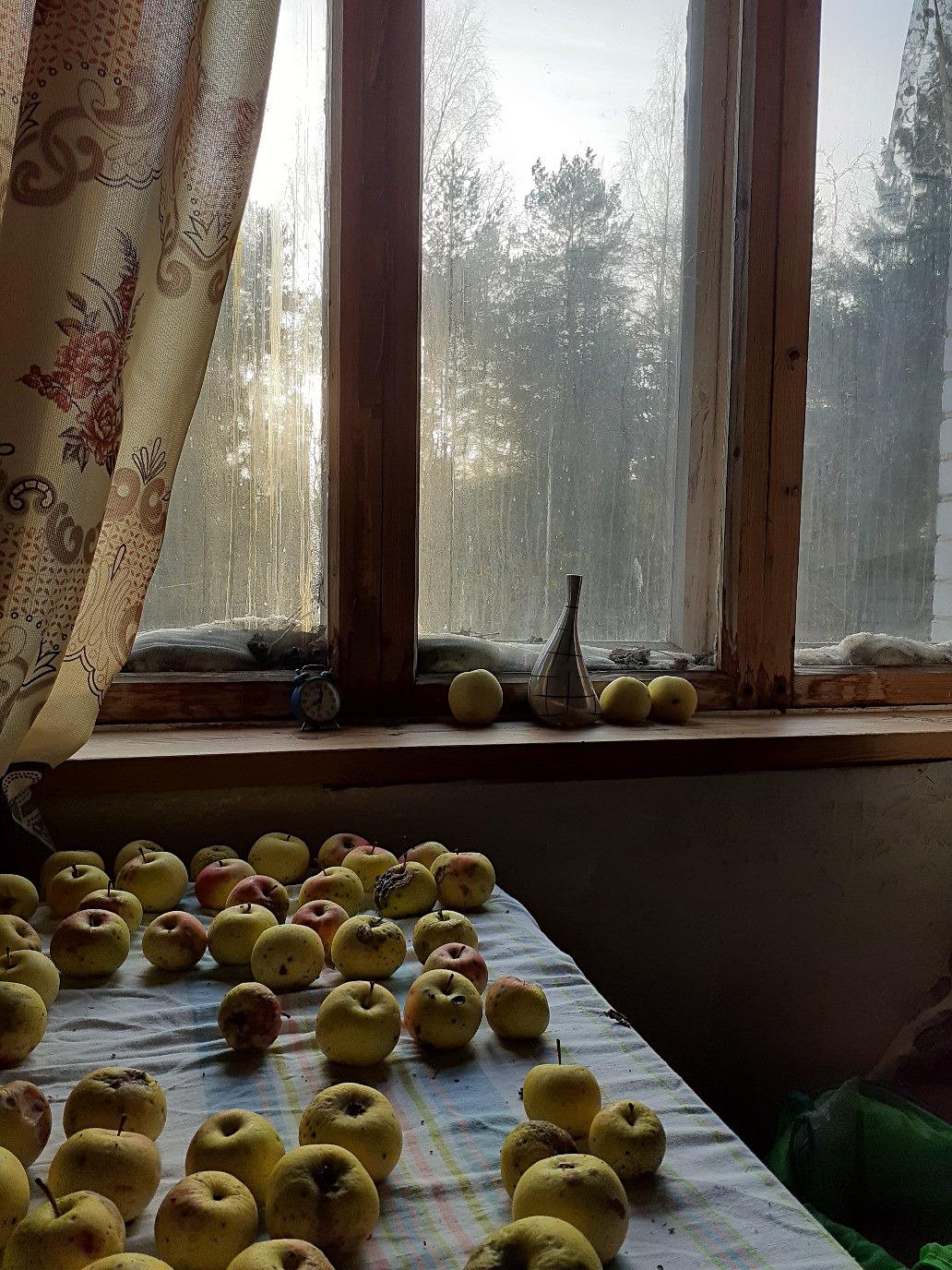 один мой ноябрьский день в Вырице, Ленинградская область