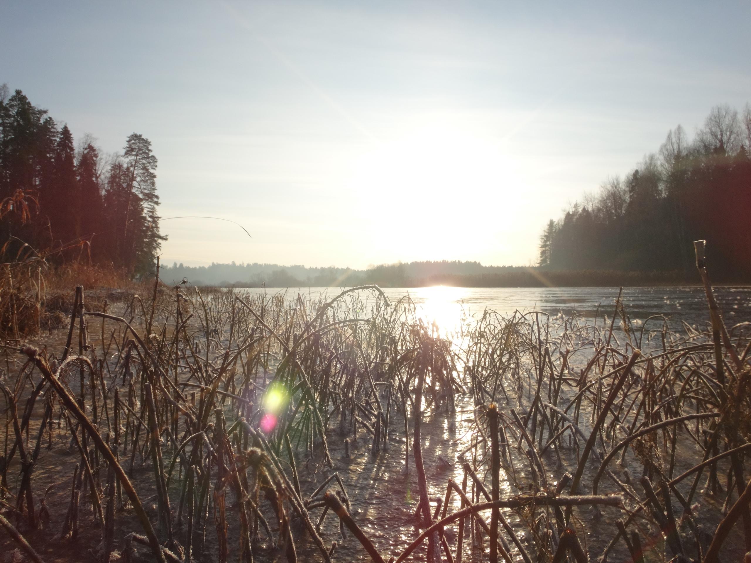 один мой ноябрьский день в Вырице, Ленинградская область, область, фото 25