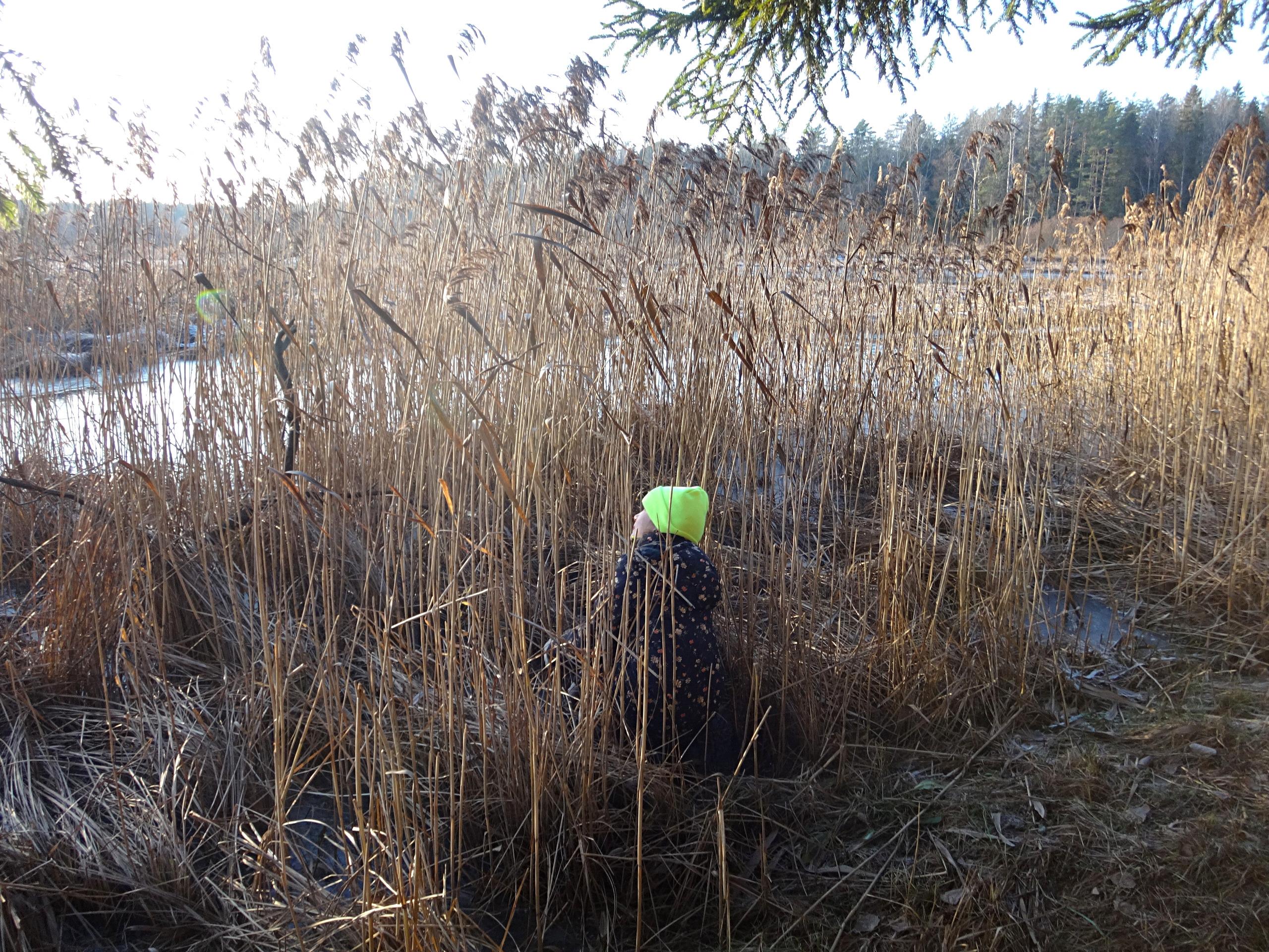 один мой ноябрьский день в Вырице, Ленинградская область, область, фото 28