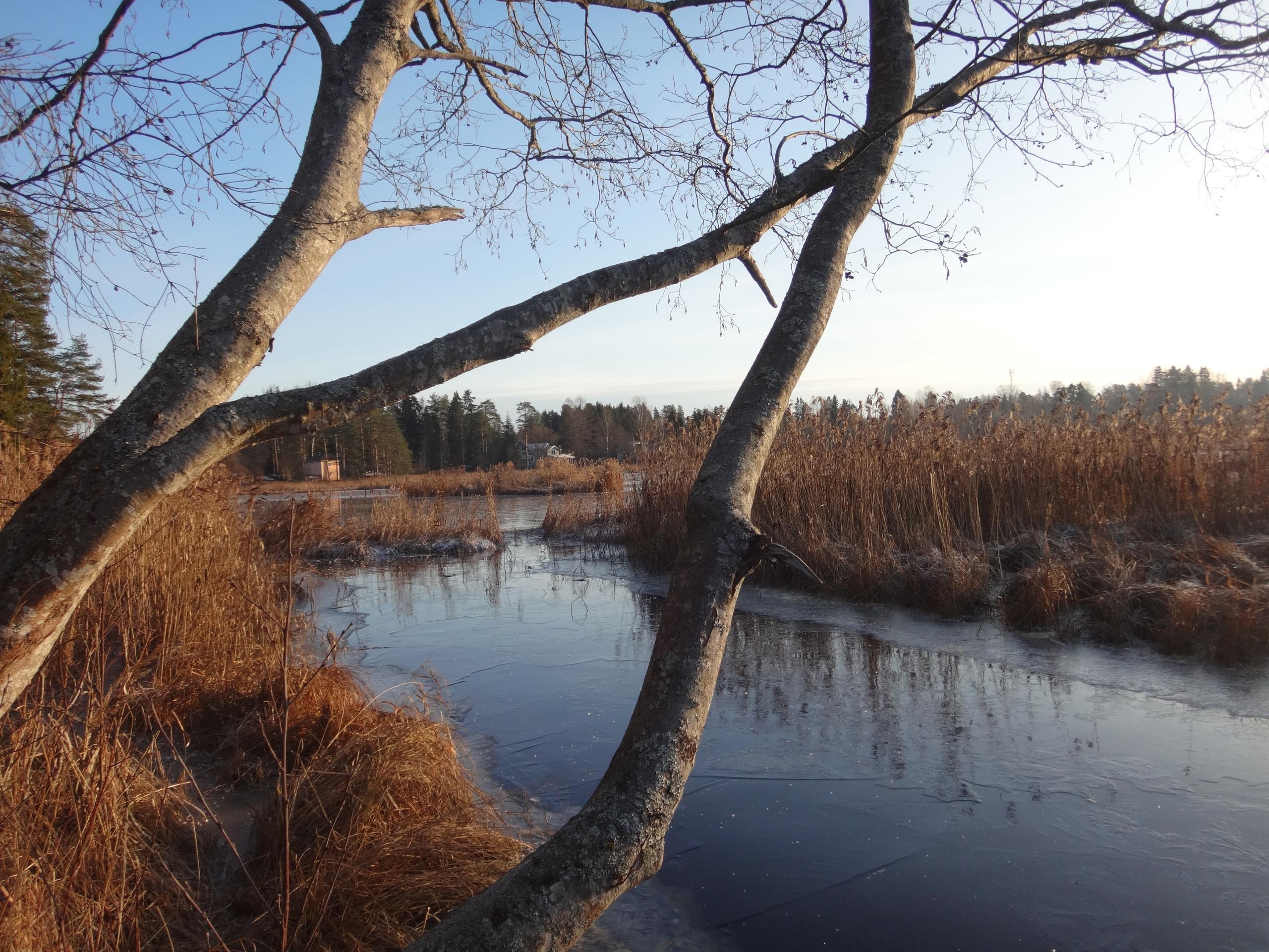 один мой ноябрьский день в Вырице, Ленинградская область, область, фото 29