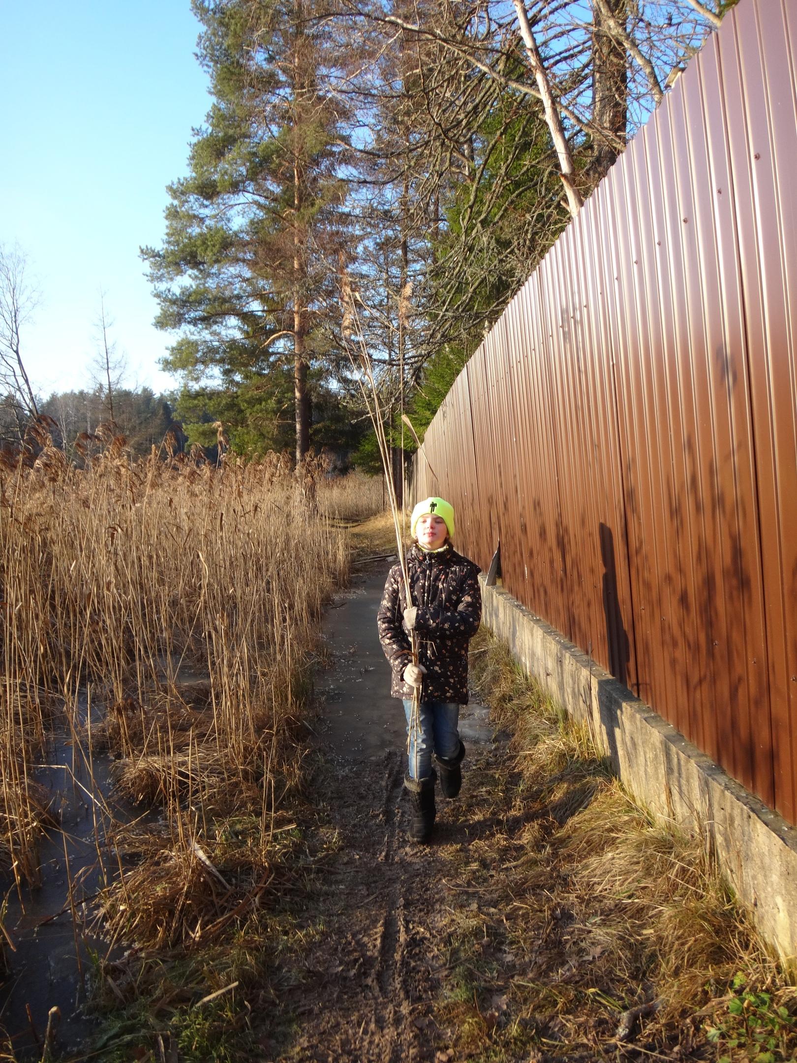 один мой ноябрьский день в Вырице, Ленинградская область, область, фото 30